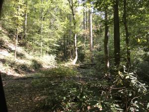 Briar Branch Rd, Townsend, TN 37882