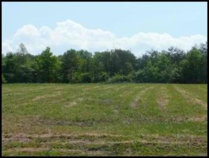 Property for sale at Lot #32 County Road 545, Englewood,  Tennessee 37329
