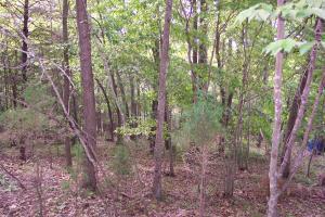 Big Pine Point, Lafollette, TN 37766