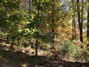 Nebo Mountain Rd, Walland, TN 37886
