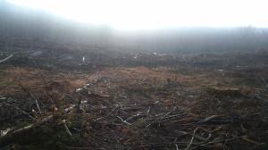 Muddy Branch Rd, Crossville, TN 38571