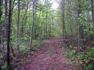 Cane Creek Mtn Rd Rd, Tellico Plains, TN 37385