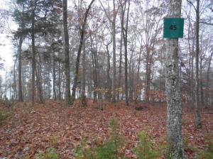 East Shore Lot 45, Rockwood, TN 37854