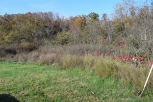 Lot 2 Rocky Springs Rd, Bean Station, TN 37708