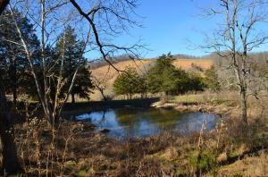 Spring fed pond!