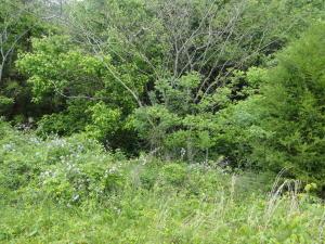 000 Laurel Bluff Rd, Kingston, TN 37763