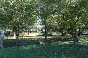 186 Carey Rd, Speedwell, TN 37870