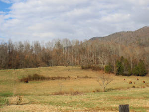 Tract 4 Rough House Hollow Rd, Mooresburg, TN 37811