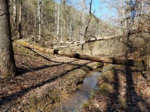 24.7 Acres Miller Hollow Rd, Bean Station, TN 37708