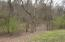 Typical wooded area of property.