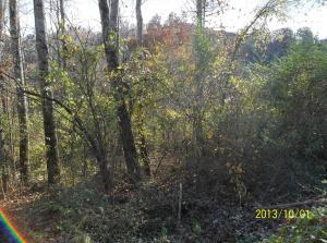 Raven Hill Rd, Tazewell, TN 37879