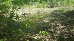 Racoon Lane, Pioneer, TN 37847