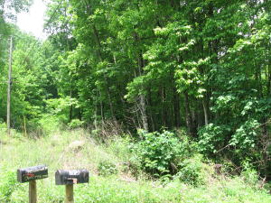 Property is Wooded. Great for Hunting or Build your Mountain Home!!