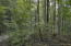 Lot 8 Cove Norris Rd, Caryville, TN 37714