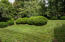 Estate Quality Professional Landscaping -- century-old Boxwoods
