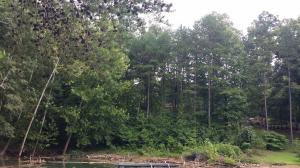 Lot 157 Bridle Way, Speedwell, TN 37870