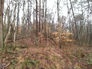 wooded 2 acre tract with lots of road frontage and city water and electric available