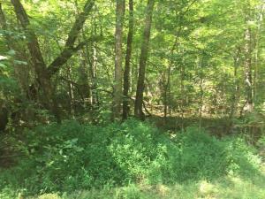 Lee Powell Lane, Ten Mile, TN 37880