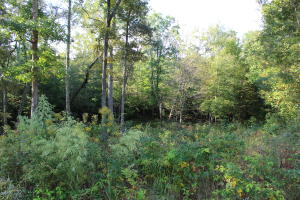 Mountain Preserve Point Lot 17, Crab Orchard, TN 37723