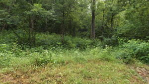 480 Shaw Hollow Rd, New Tazewell, TN 37825