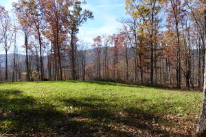 Persimmon Lane, Pioneer, TN 37847