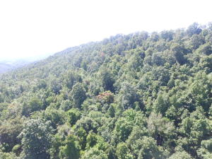 Lot 215 Clinch View Rd, New Tazewell, TN 37825