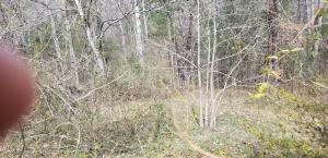 331 Black Oak Rd, Harriman, TN 37748