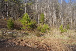 Wilderness Drive, Vonore, TN 37885