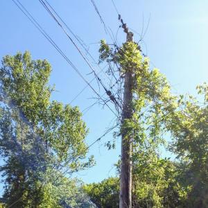 344 Old Clear Branch Lane, Rocky Top, TN 37769