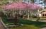 The Red-bud trees are blooming - a sure sign spring is on the way in East Tennessee.