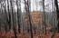 Pine Hollow Rd, Jacksboro, TN 37757