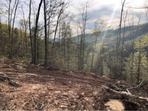Property for sale at Early Branch Rd, Rogersville,  Tennessee 37857