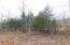 Morning Glory Rd, New Tazewell, TN 37825
