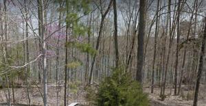 Stoney Rock Lane, Jacksboro, TN 37757