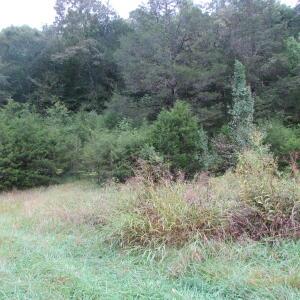 109 Cox Creek Lane, Harrogate, TN 37752