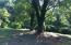 Mature trees.