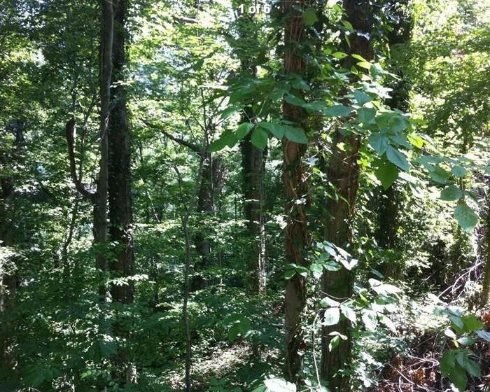 731 Ivy Hill, Harlan, KY 40831