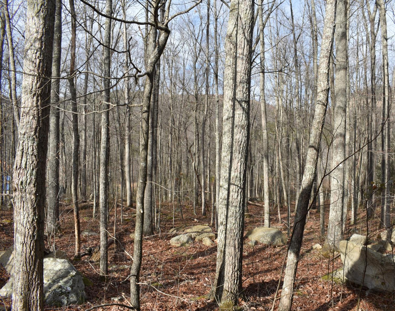 79 Brush Mountain Circle, Miracle, KY 40856