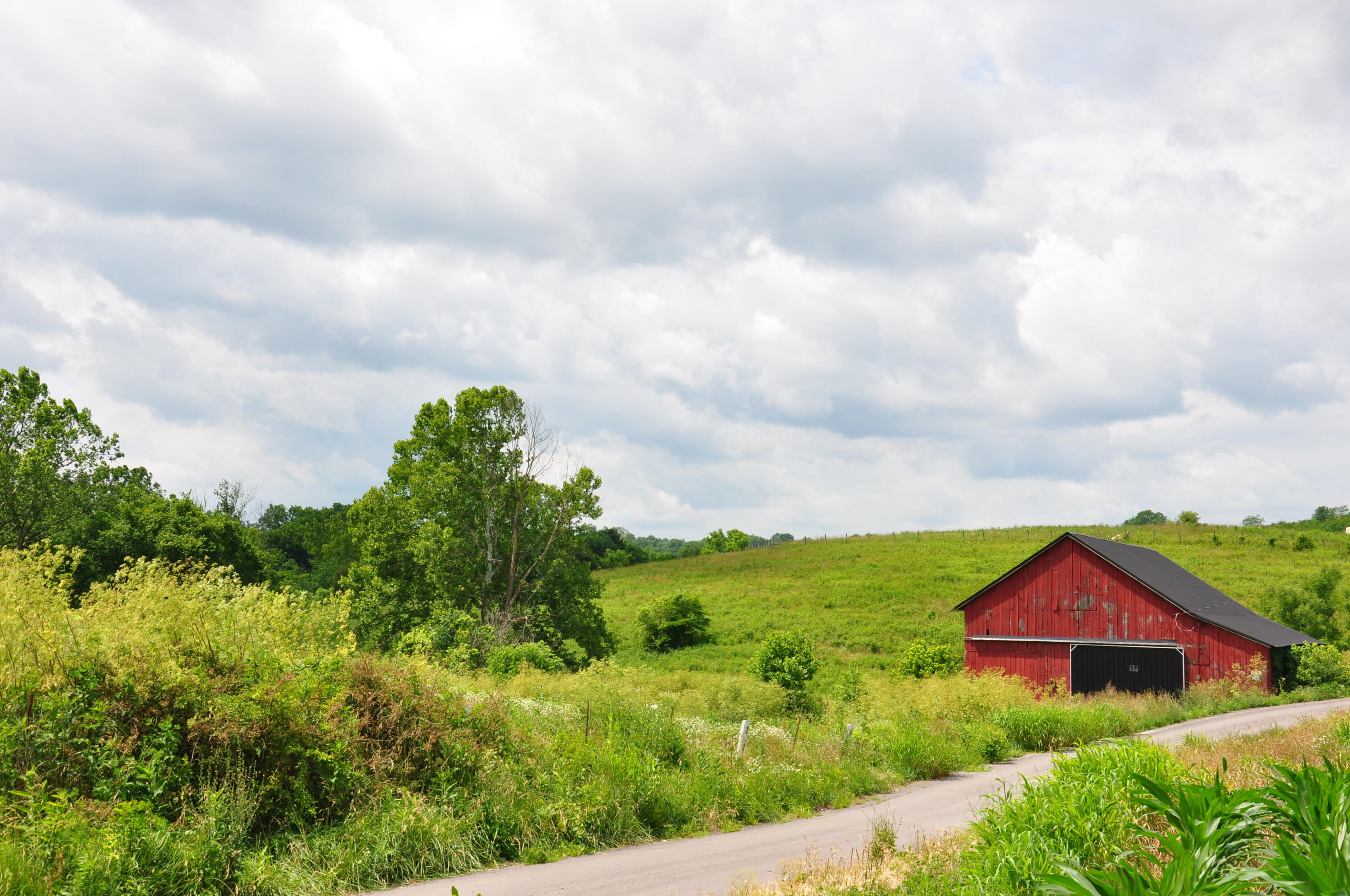 000 Abners Mill / Veale Lane, Ewing, KY 41039