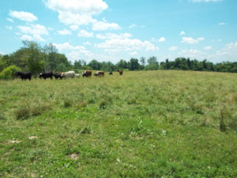 7101 Buckeye Road, Lancaster, Kentucky 40444, ,Farm/land,For Sale,Buckeye,20112270