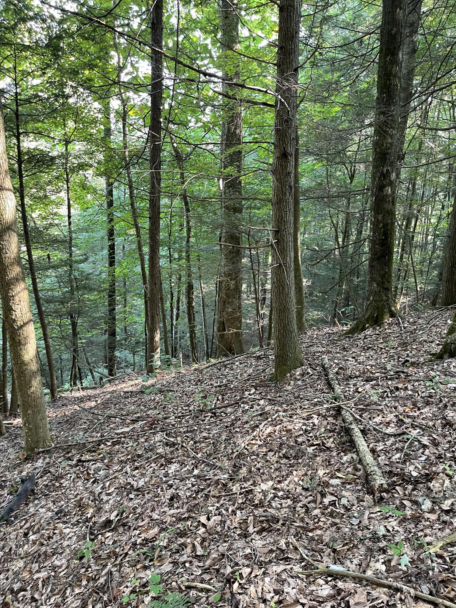 Tr 3 Booth Ridge Ridge, Rogers, KY 41365