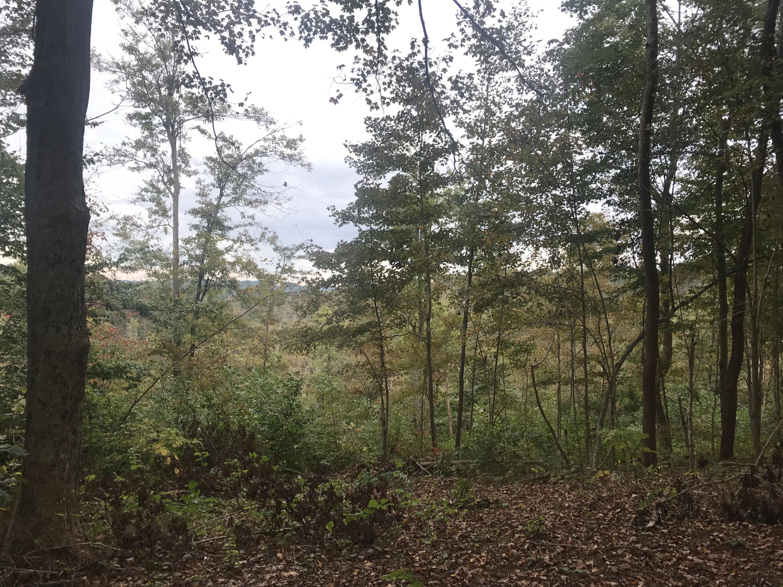 0 Fleming Fork, Olive Hill, KY 41164