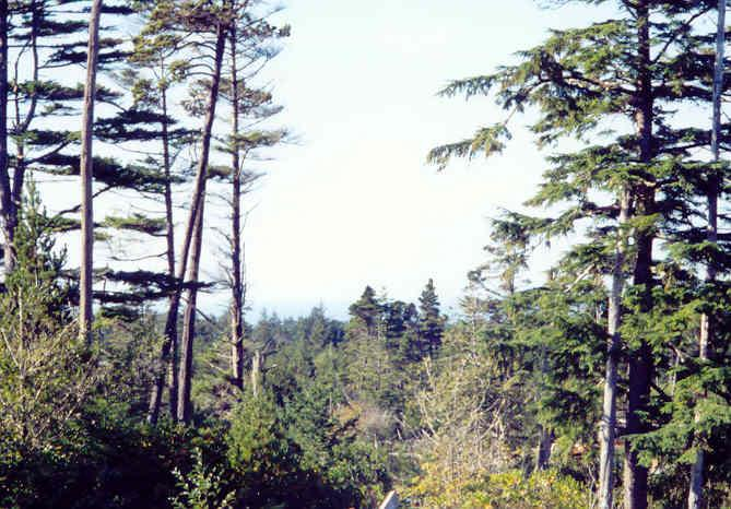 600 Kimberly St., Seal Rock, OR 97376 - Listing Photo