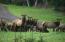 3545 Ridge Rd., Otis, OR 97368 - Local elk Herd