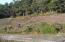 3455 SW Fernwood Ln, Waldport, OR 97394 - Adjacent lot