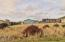 2006 NW Cutter St, Waldport, OR 97394 - Lot Looking North
