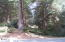486 Lookout Dr, Gleneden Beach, OR 97388 - Beautiful Mature Forest