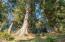 3575 Ridge Rd, Otis, OR 97368 - Old growth Sitka Spruce