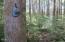 LOT 15 Hamer Rd, Siletz, OR 97380 - Timber property
