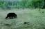 TL 1401 E Alsea Hwy, Tidewater, OR 97390 - Zen Bench Bear